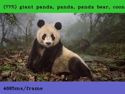 ELL successfully recognized the Giant Panda! Yay!