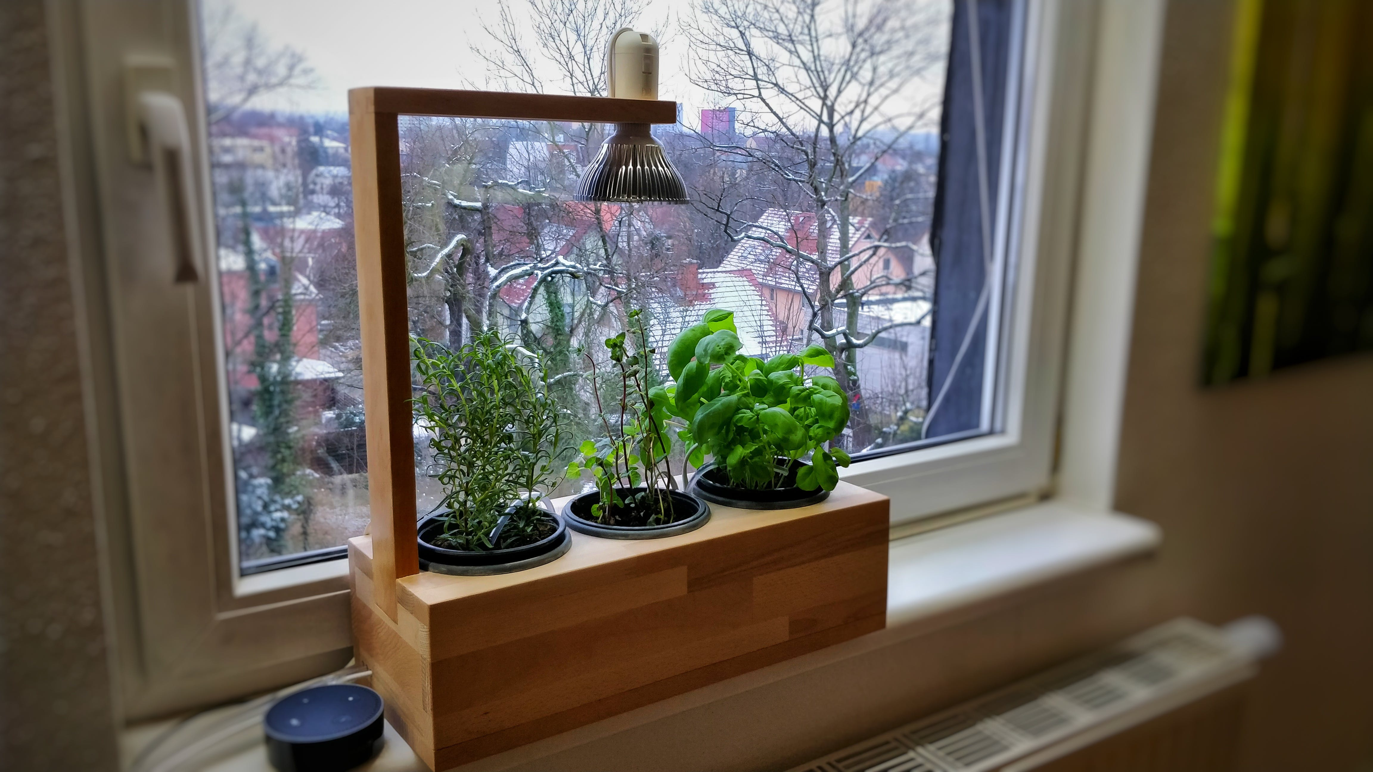 the herb box at my window