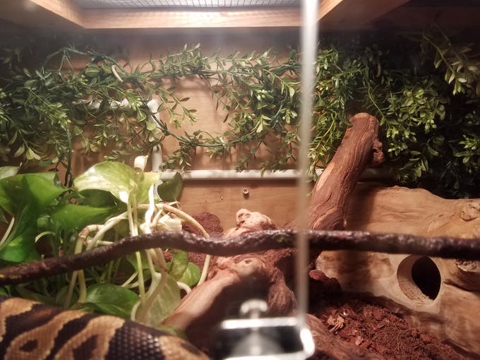 wire molds to keep the snakes from getting tangled
