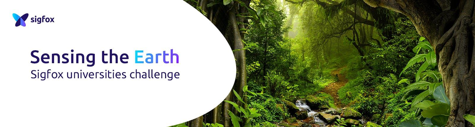 jungle-desktop.png