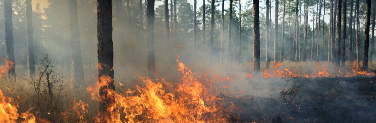 Wildfires in the early stage
