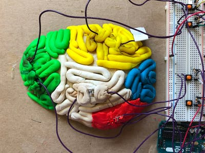 3D Light Up Brain Model