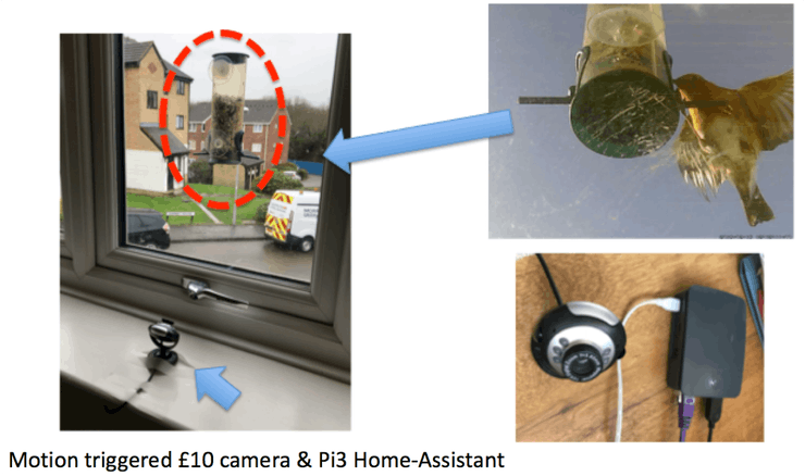Motion Activated Image Capture and Classification of Birds