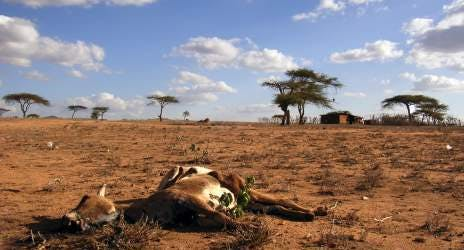 Every year, thousands of animals and ecosystems disappear or are affected by climate change.