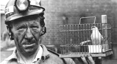 John Scott holding a canary cage used in coalmines rescue training at Cannock Chase, UK (Image courtesy of the Museum of Cannock Chase.Copyright unknown.)