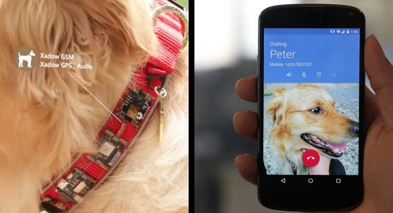 RePhone - Traceable Dog Collar