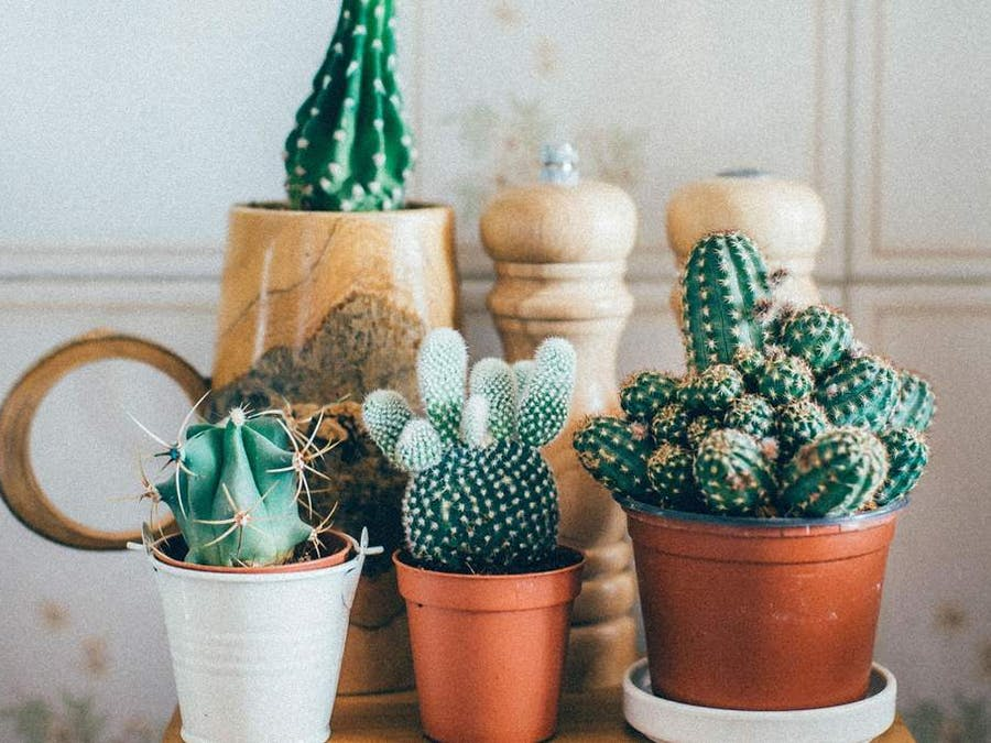 Smart Succulent