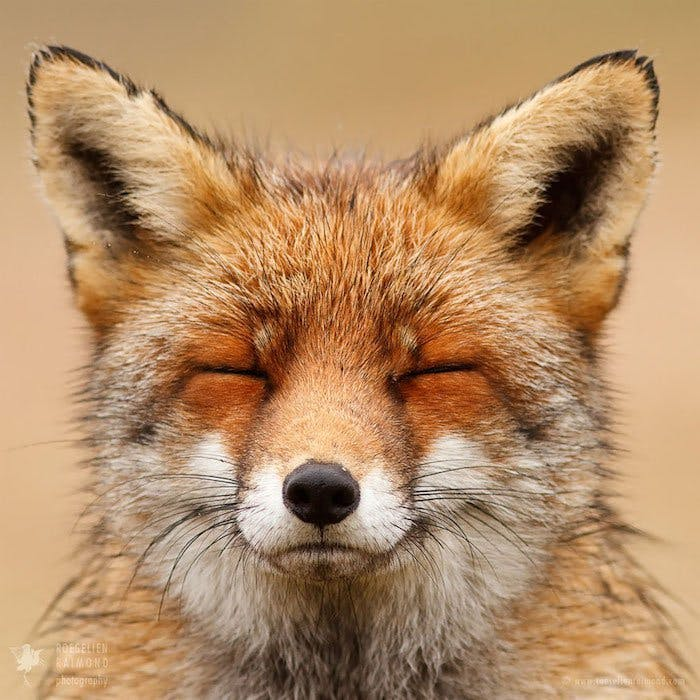 Roseline raimond renards personnalites photographies 02 9c6ddxfh2a