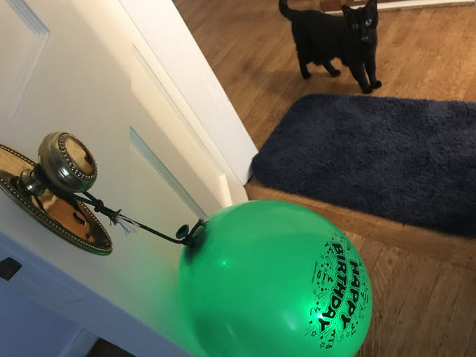 The morning when I saw my landlord's cat and a birthday balloon