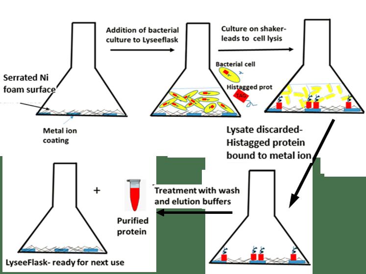 LyseeFlask