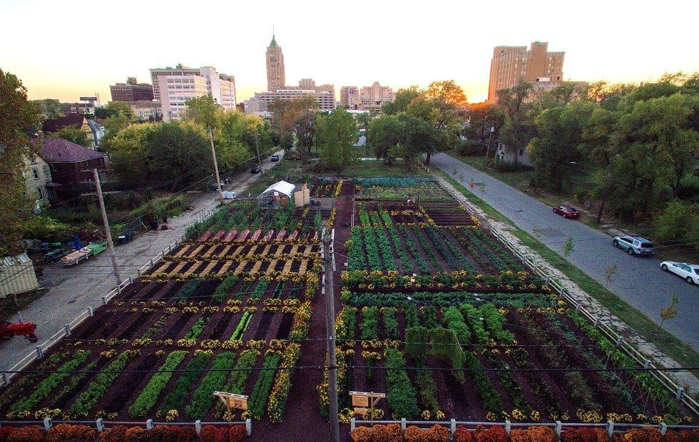 Urban agriculture in Detroit courtesy of the Michigan Urban Farming Initiative