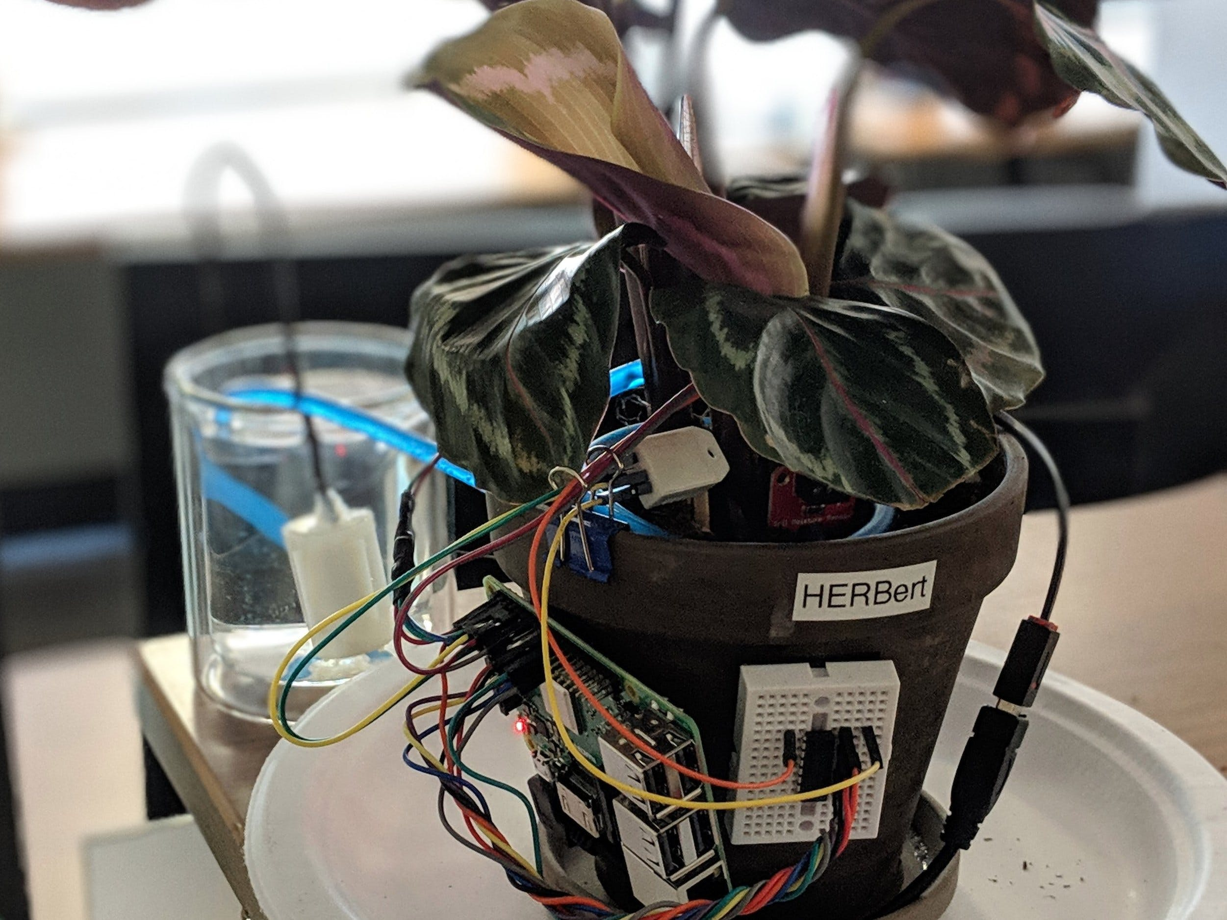 Herb(ert): A Desk Plant with Automated Irrigation
