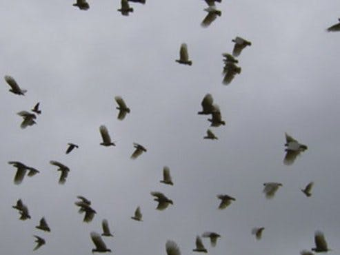 Bird Flock Early Warning System