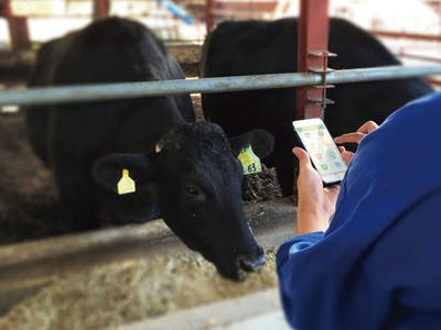 """Making Cows """"Smart"""" with IoT - Soracom"""