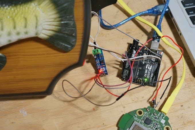 Arduino and Echo Dot connected to the LM386 amplifier board and internal Billy Bass Speaker