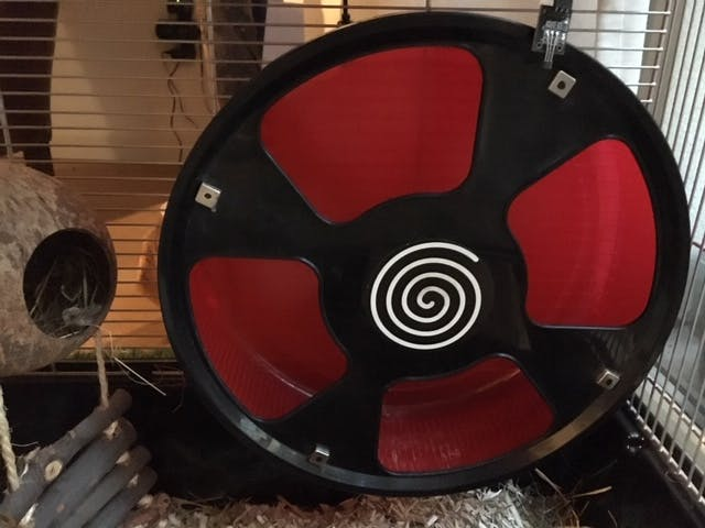 Fig. 1: Hamster wheel with 4 magnets and hall sensor board