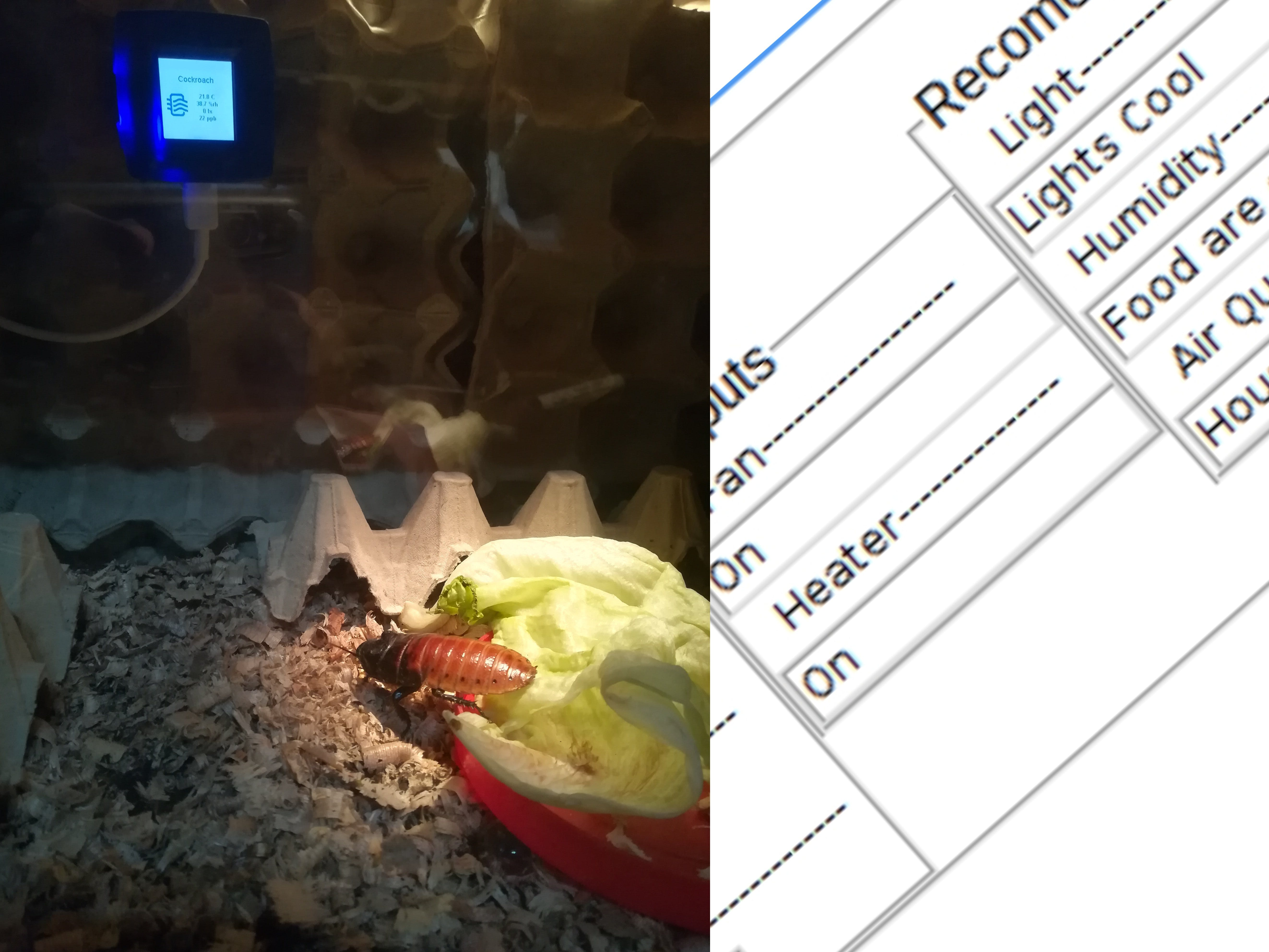 Smart Home for a Madagascar Hissing Cockroach