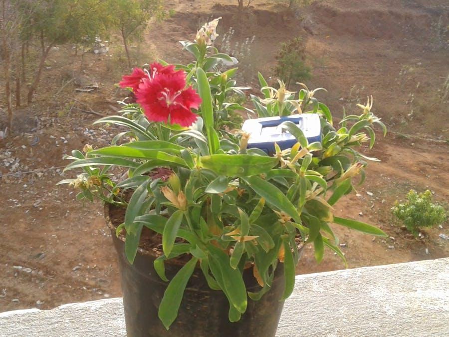 In-door plant protector