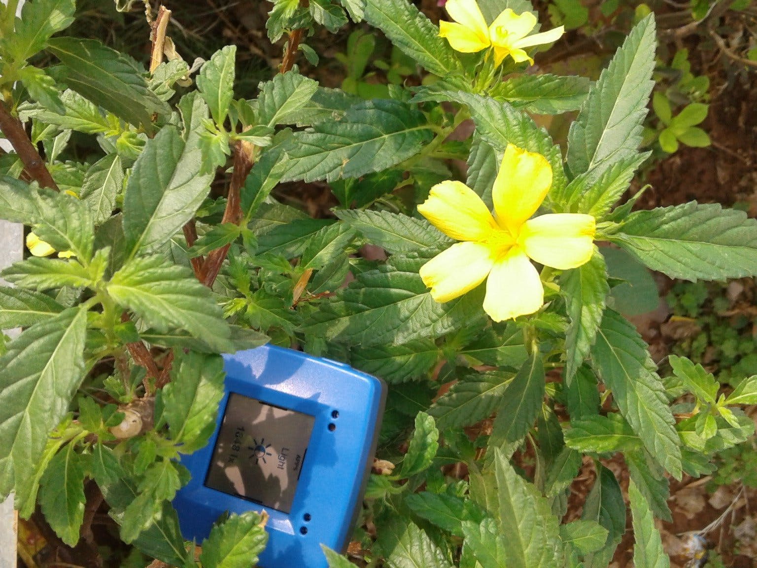 Horticulture environment sensing device