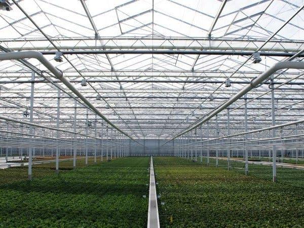 STING: Greenhouse Light Management System