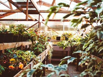 Plant Monitoring Using Sigfox