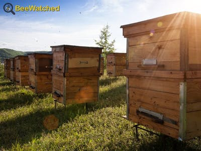 BeeWatched, the Connected Beehive Monitoring Box