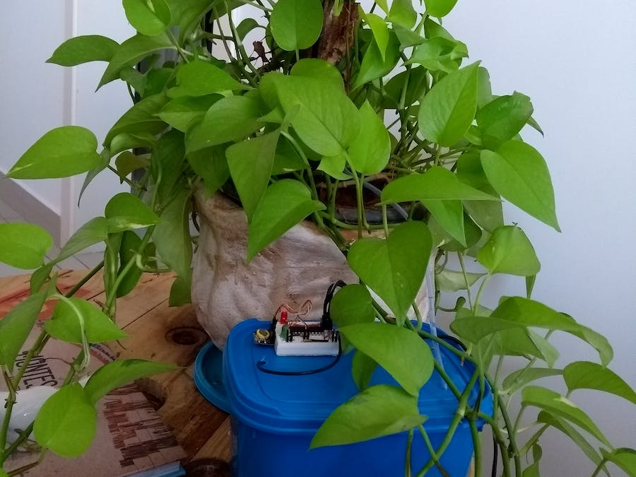 Simple Irrigation to Plants
