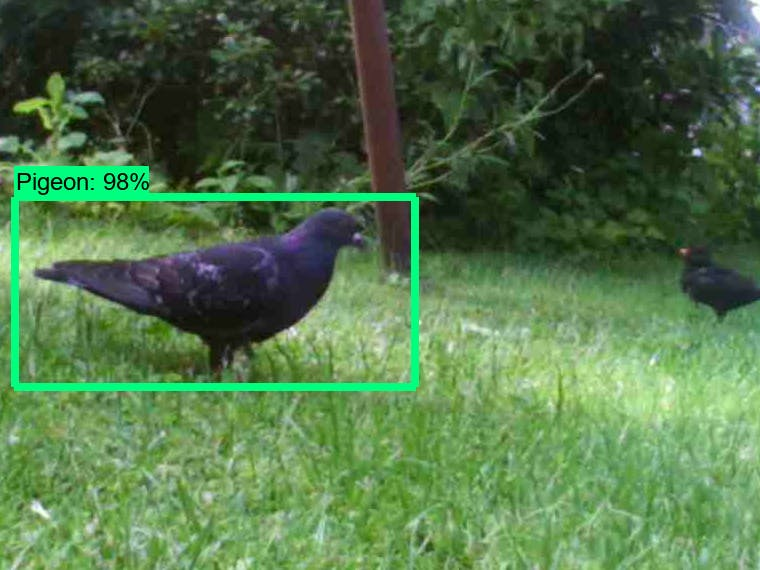 Pigeon Detection System