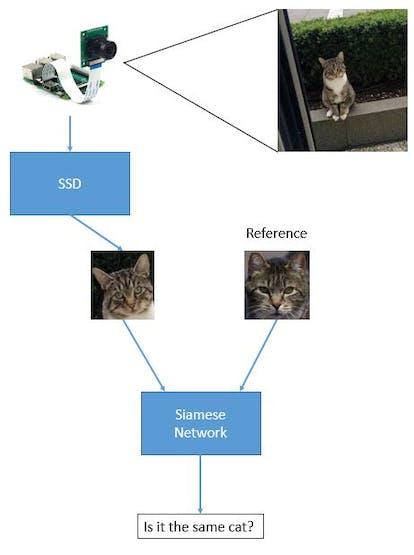 Cat recognition concept