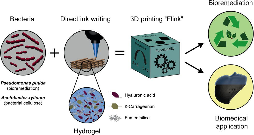 Open & Affordable 3D Bioprinting - Hackster io