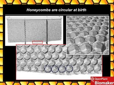 Visualising the Honeycomb Conjecture