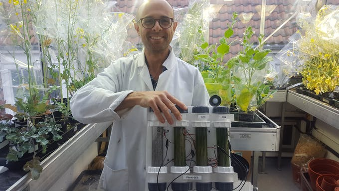 Dr Bombelli with a proof-of-concept showing power generated from water grass (not shown but also in development are cells developed using vascular plants)