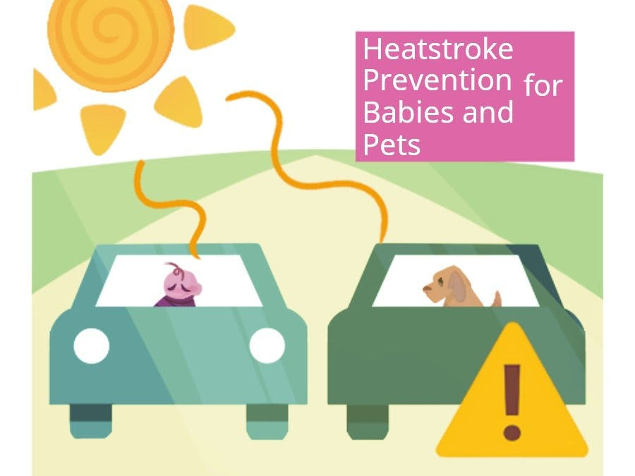 Heatstroke Prevention for Babies and Pets