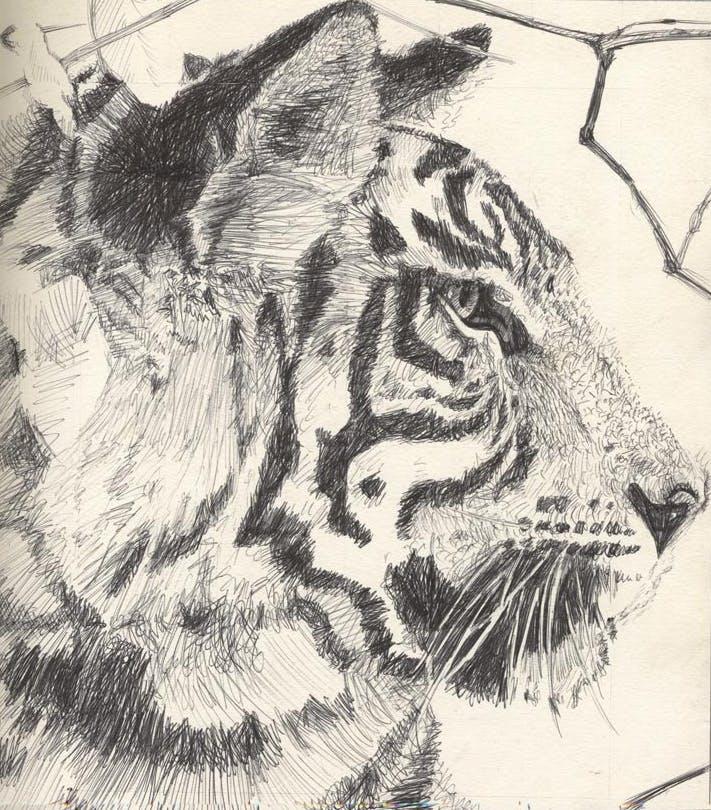 Tiger biro