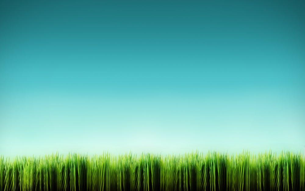 Grass blades by  kol d17tfuv