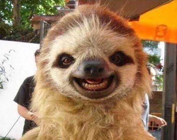 Smiling animal3