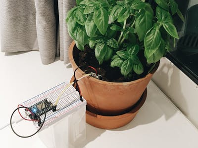Water my Basil plant