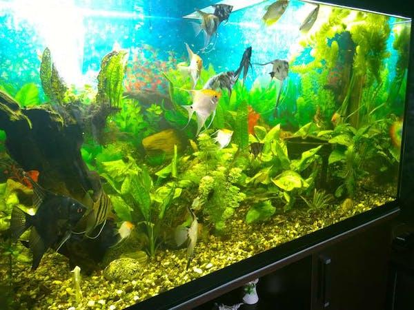 Arduino aquarium controller hackster
