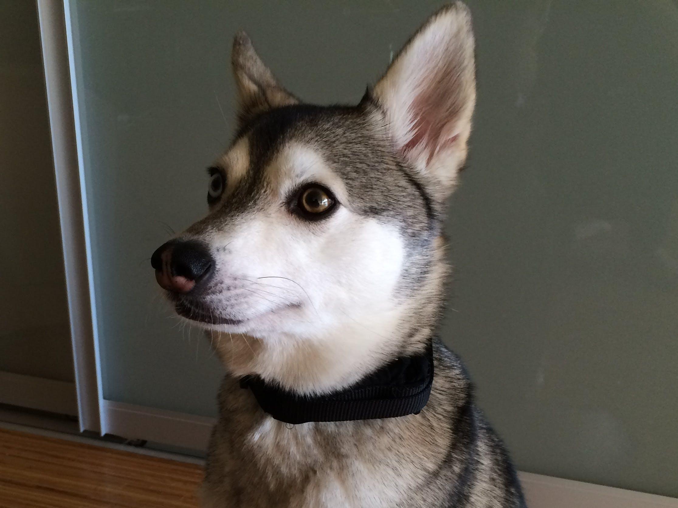 Buzz Wolf