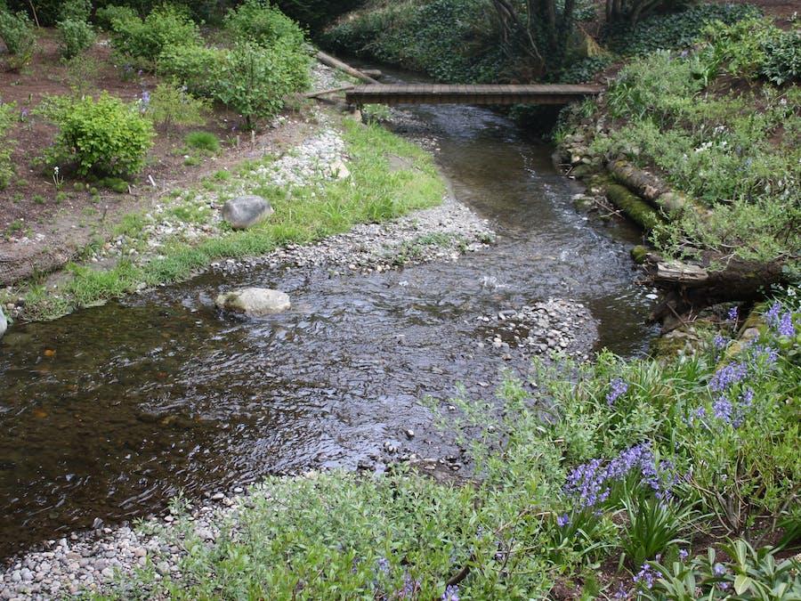 Salmon Stream Monitoring