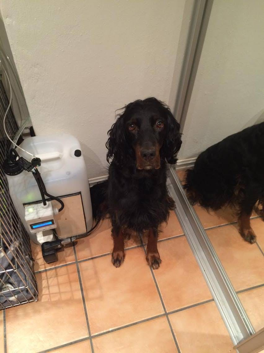 Automatic Pet Watering System