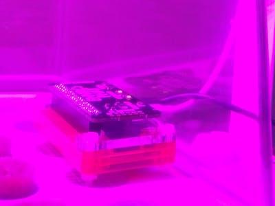 IoT Tweeting Plants with Raspberry Pi