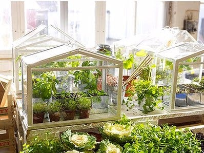 Classroom Greenhouse with Blynk