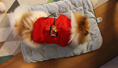 A Sleep Tracker for Your Dog Using Tessel and Twilio