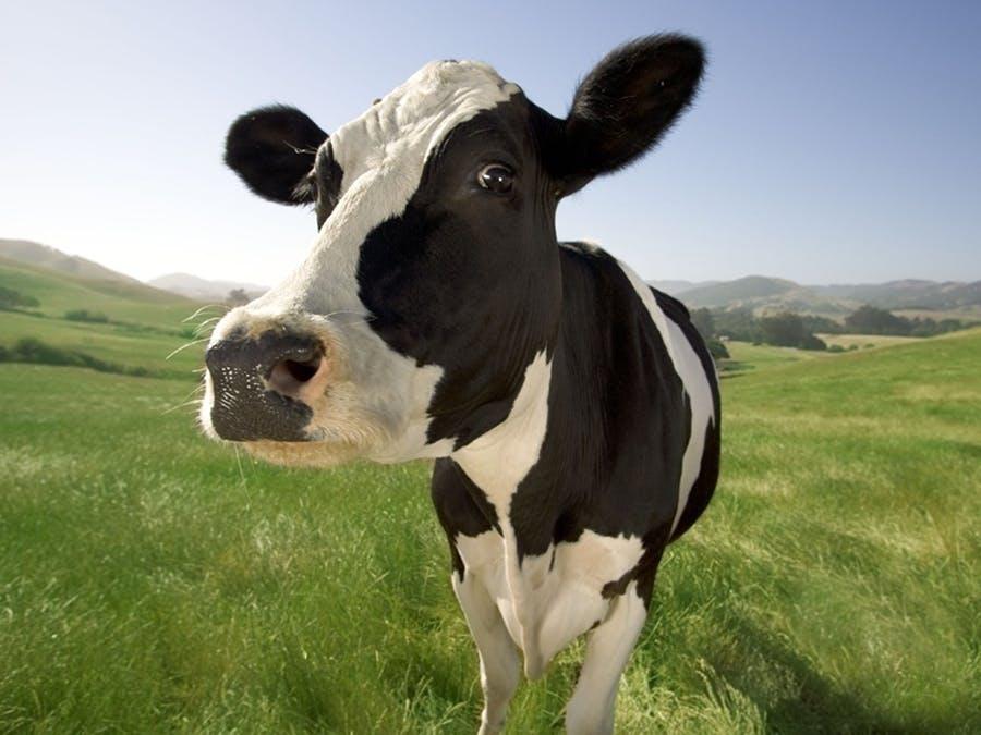 Got Milk? 🐮
