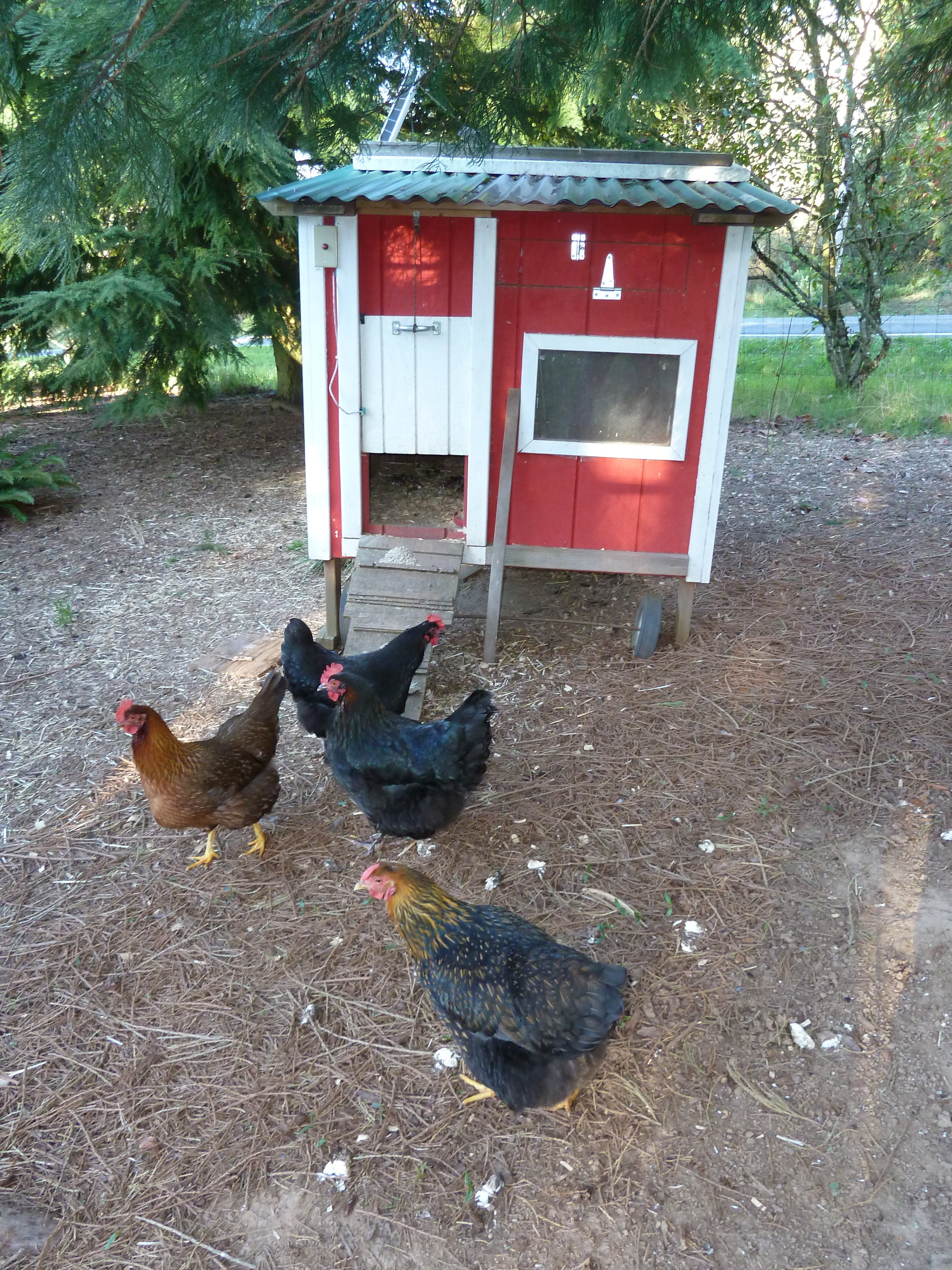 Chicken coop monitor