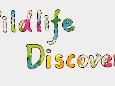 Wildlife Discovery Interactive Prototype