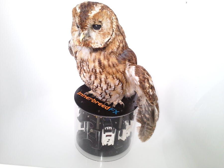 Animatronic 3D printed Bird