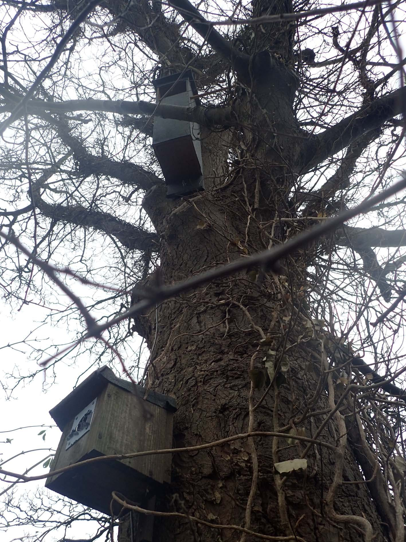 Bird Boxes in Tree