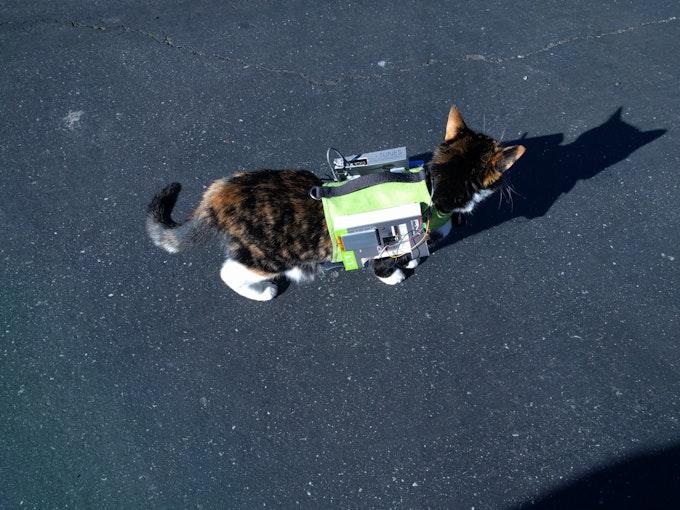 Kitty wearing a raspberry pi